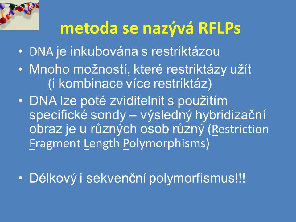 metoda se nazývá RFLPs DNA je inkubována s restriktázou