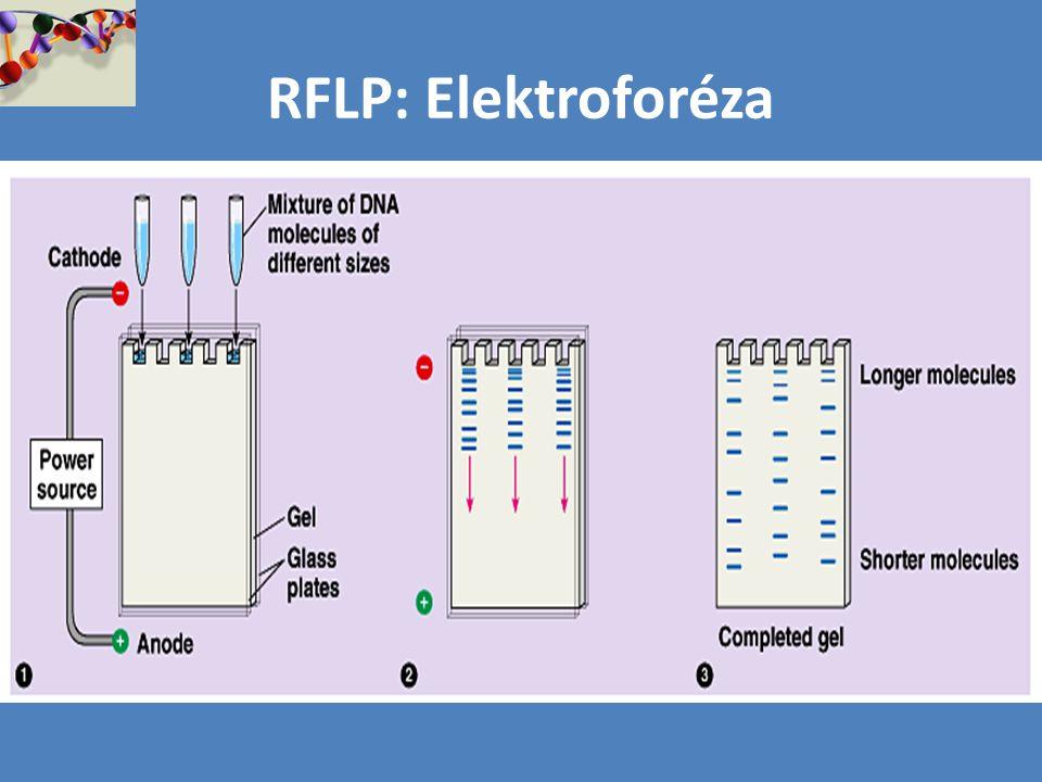 RFLP: Elektroforéza