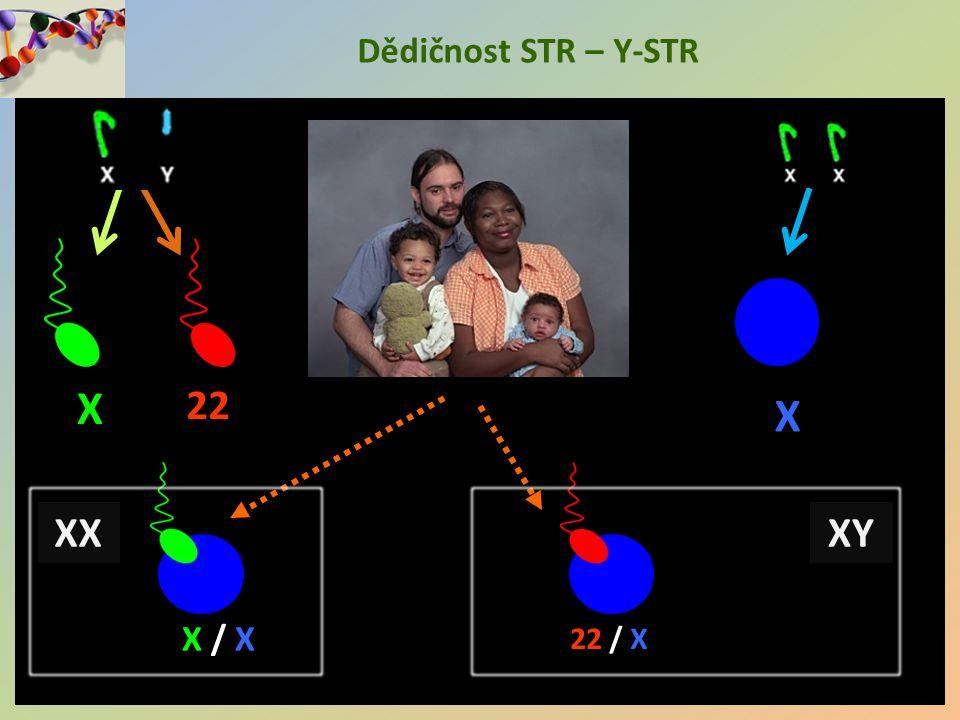 Dědičnost STR – Y-STR X 22 X X / X 22 / X XX XY