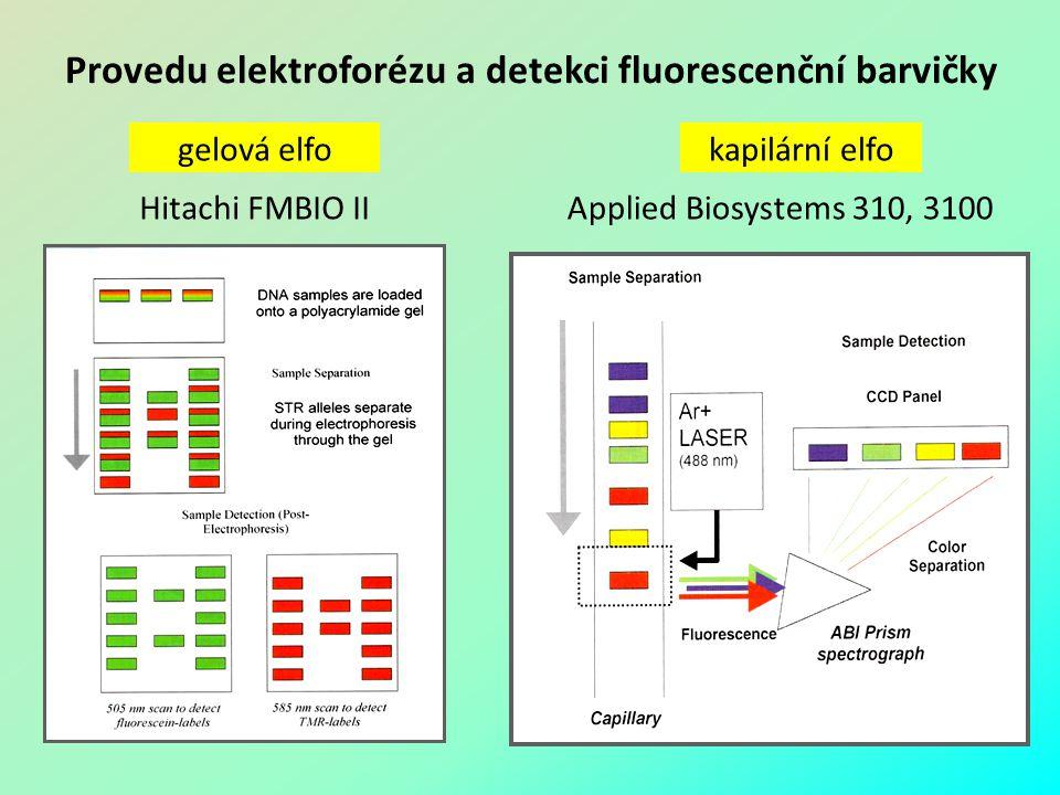 Provedu elektroforézu a detekci fluorescenční barvičky