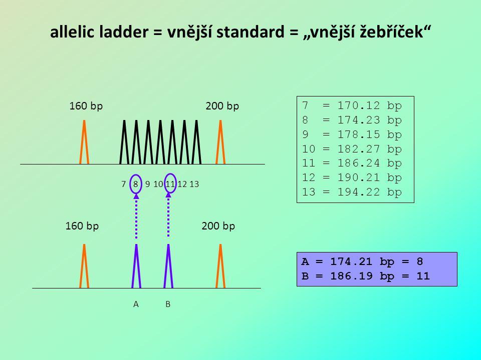 """allelic ladder = vnější standard = """"vnější žebříček"""