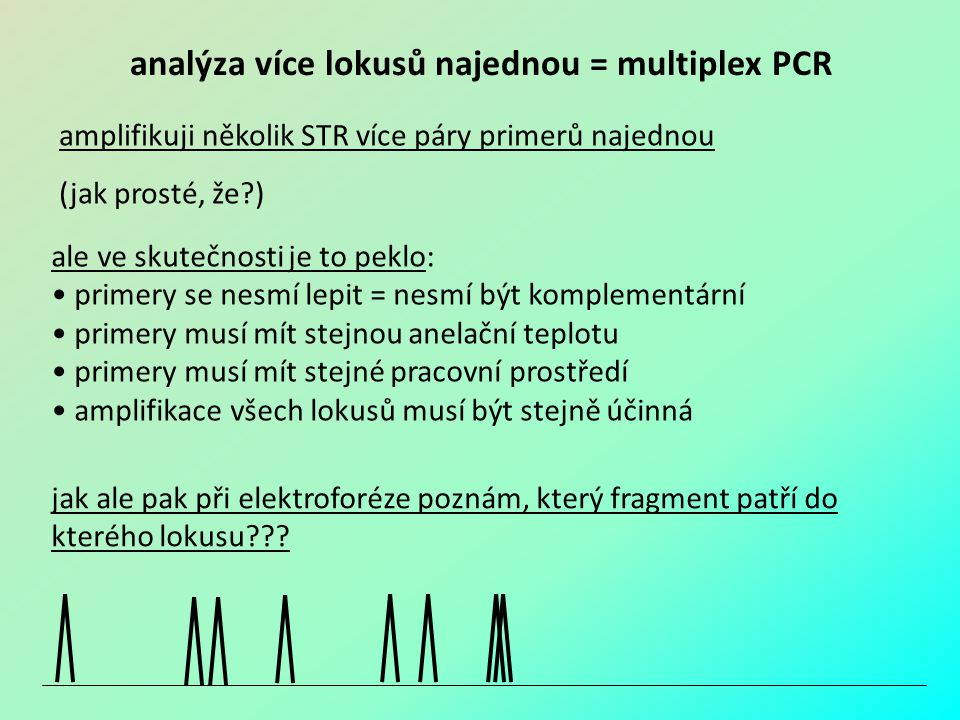 analýza více lokusů najednou = multiplex PCR