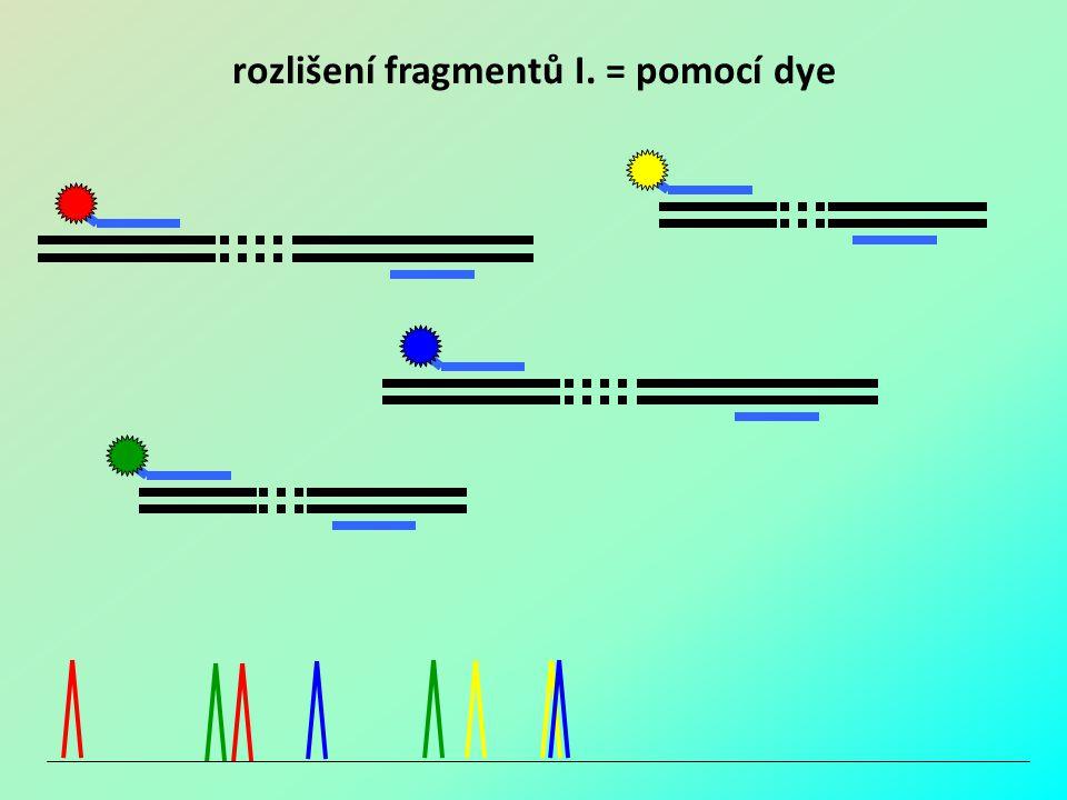 rozlišení fragmentů I. = pomocí dye