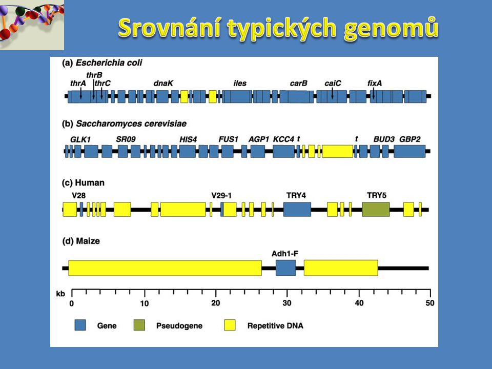 Srovnání typických genomů