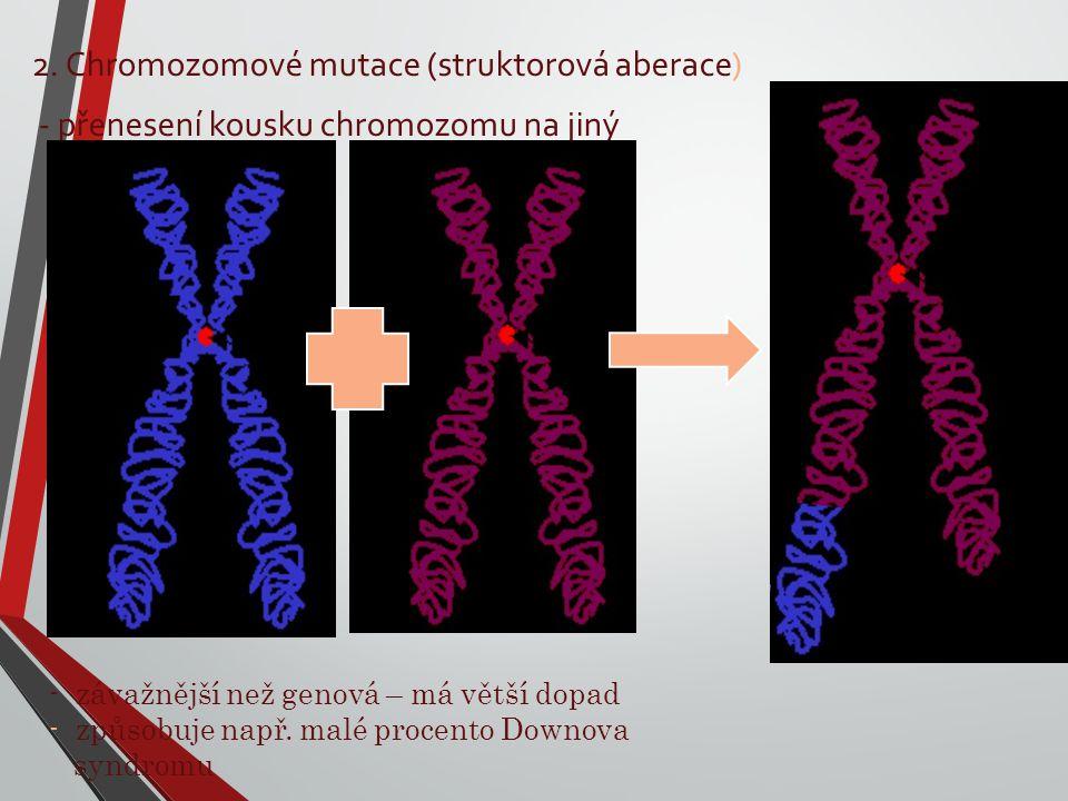 2. Chromozomové mutace (struktorová aberace) - přenesení kousku chromozomu na jiný