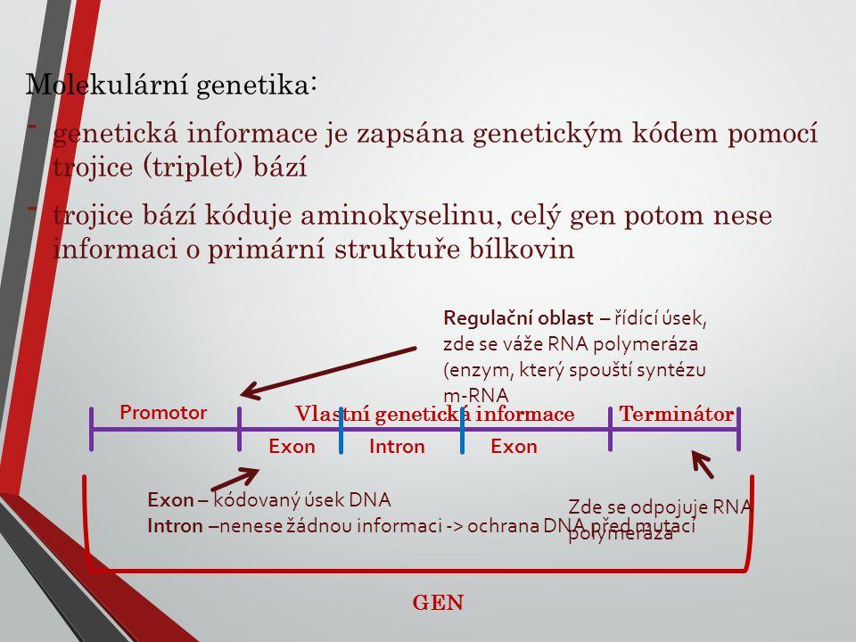 Molekulární genetika: