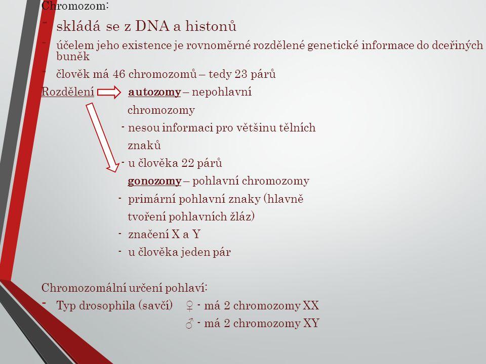 skládá se z DNA a histonů