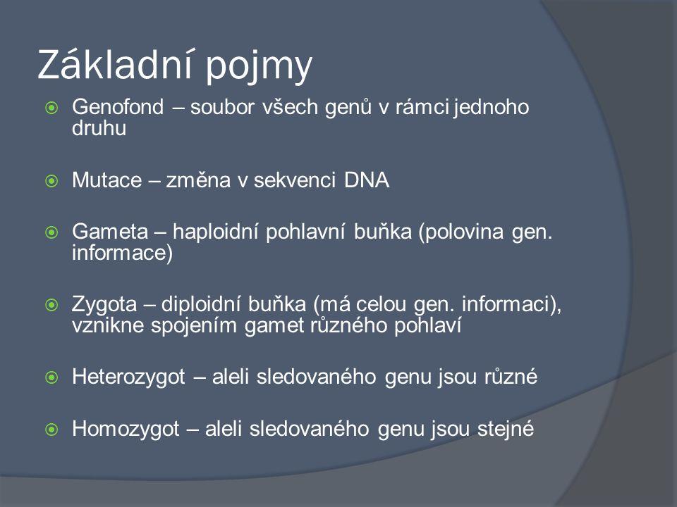Základní pojmy Genofond – soubor všech genů v rámci jednoho druhu