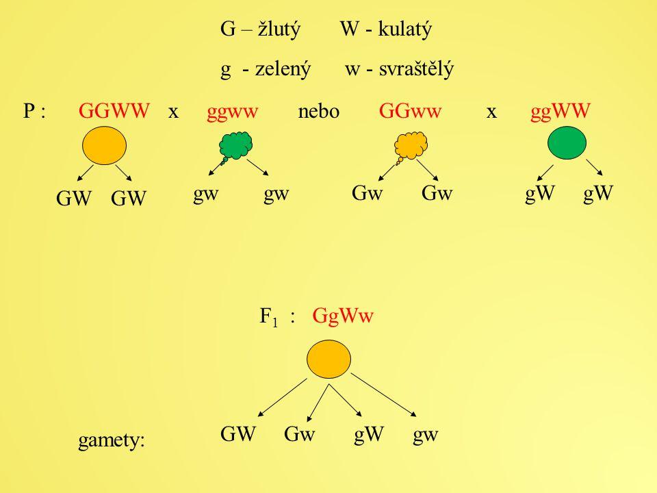 G – žlutý W - kulatý g - zelený w - svraštělý. P : GGWW x ggww nebo GGww x ggWW.