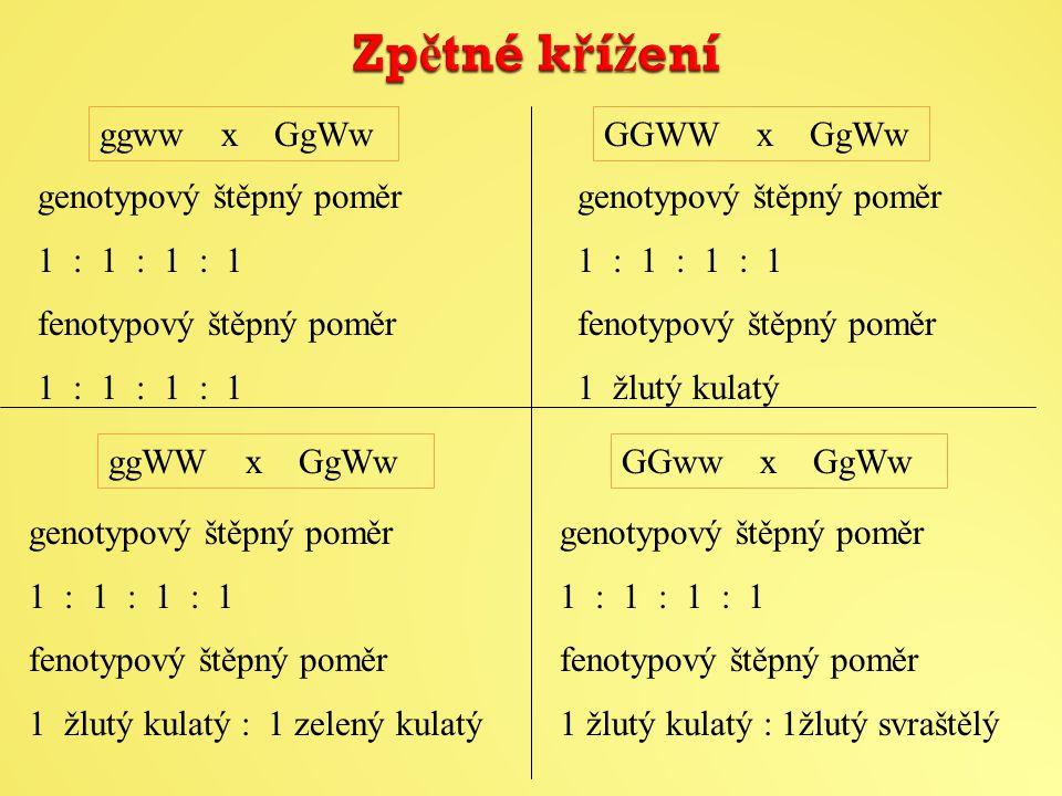 Zpětné křížení ggww x GgWw GGWW x GgWw genotypový štěpný poměr