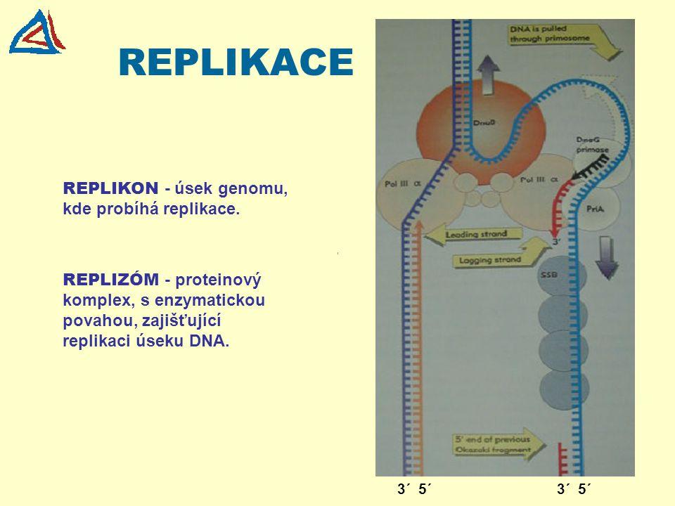 REPLIKACE REPLIKON - úsek genomu, kde probíhá replikace.