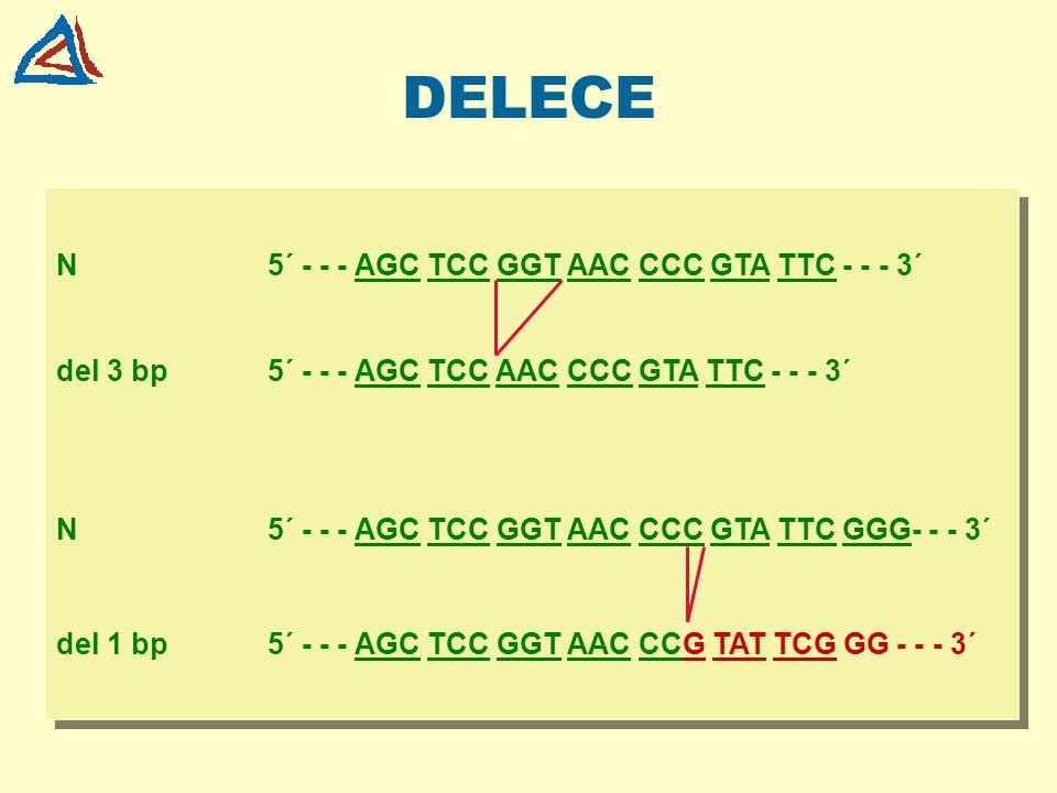 DELECE N 5´ - - - AGC TCC GGT AAC CCC GTA TTC - - - 3´