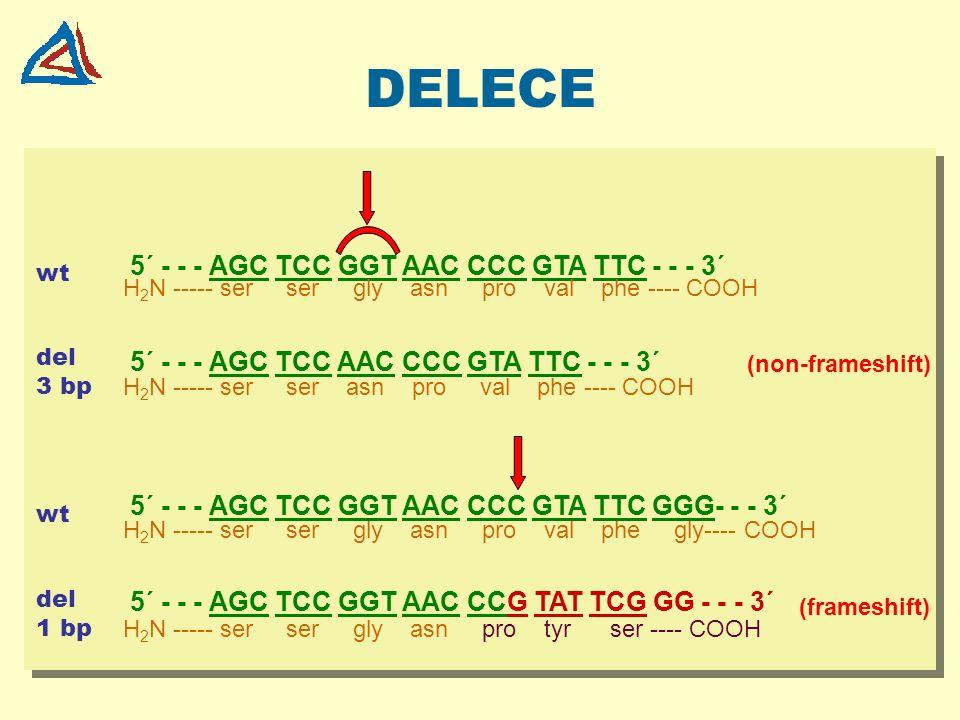 DELECE 5´ - - - AGC TCC GGT AAC CCC GTA TTC - - - 3´
