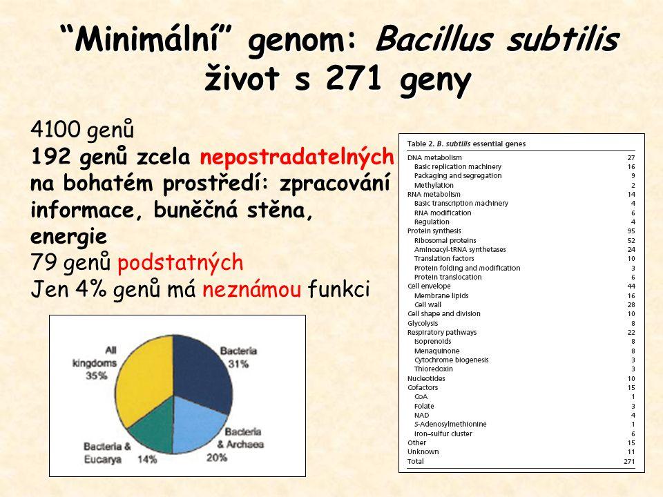 Minimální genom: Bacillus subtilis život s 271 geny