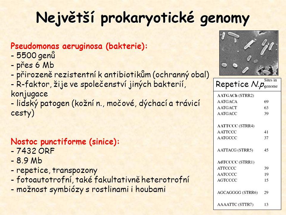 Největší prokaryotické genomy