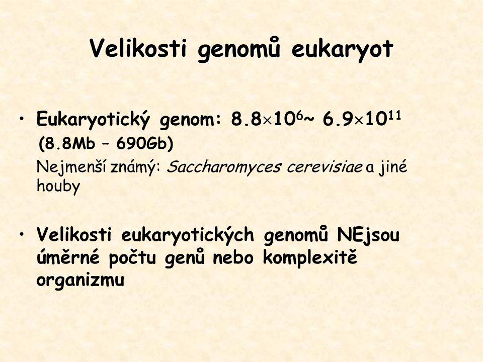 Velikosti genomů eukaryot