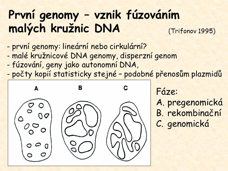 První genomy – vznik fúzováním malých kružnic DNA