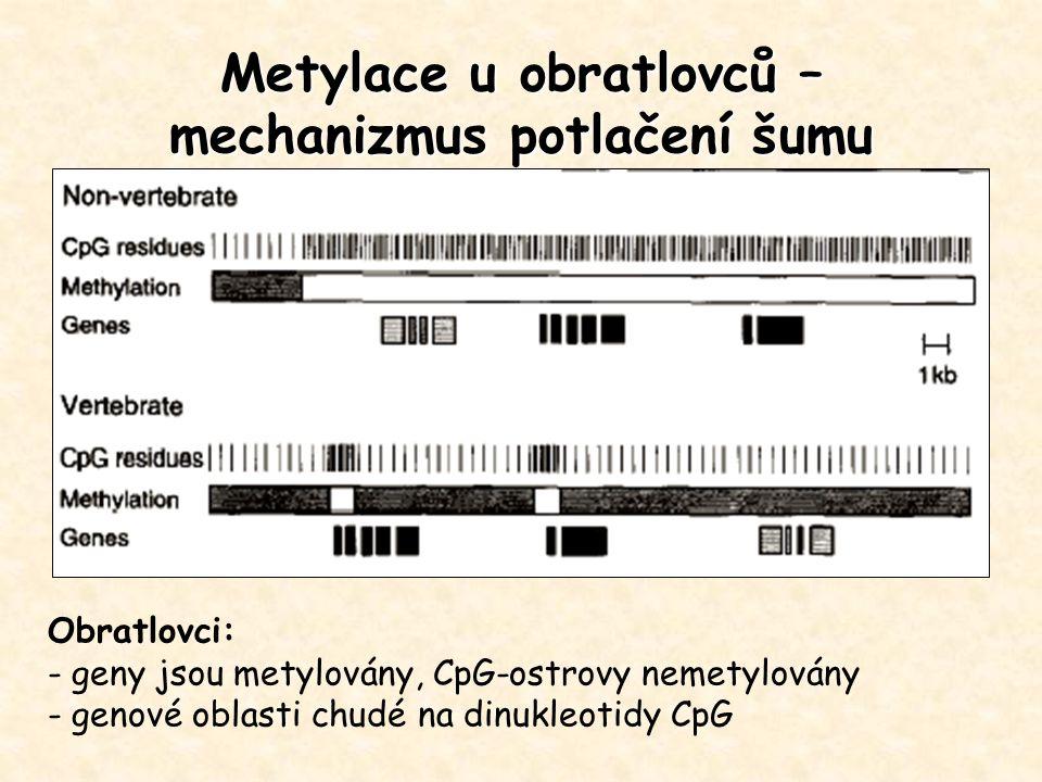 Metylace u obratlovců – mechanizmus potlačení šumu