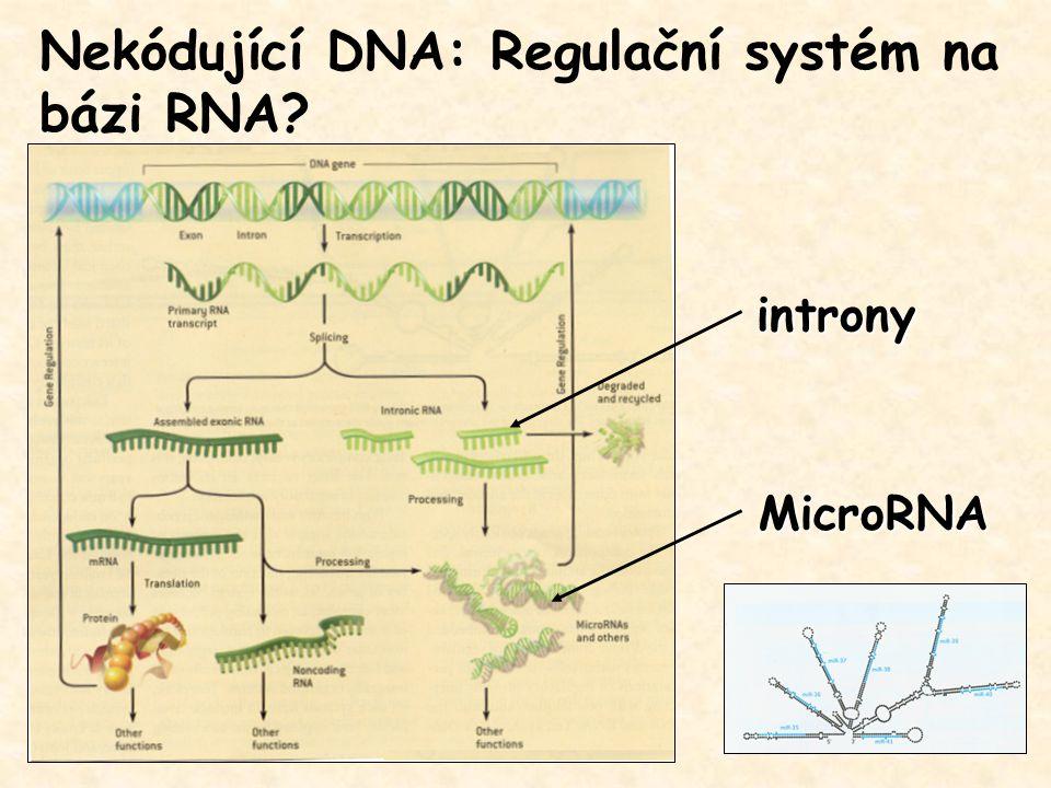 Nekódující DNA: Regulační systém na bázi RNA