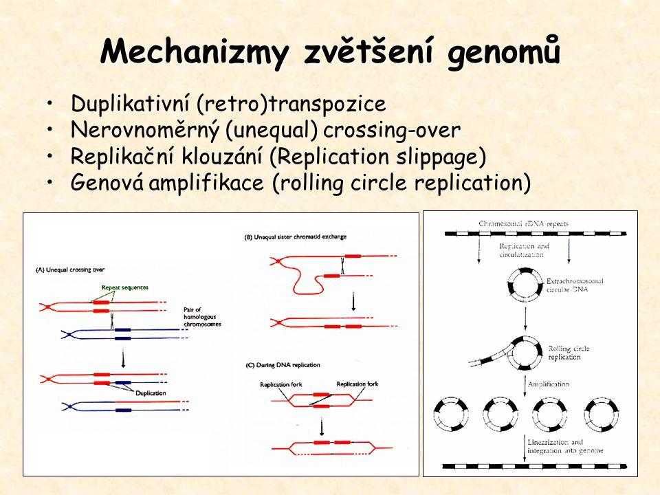 Mechanizmy zvětšení genomů