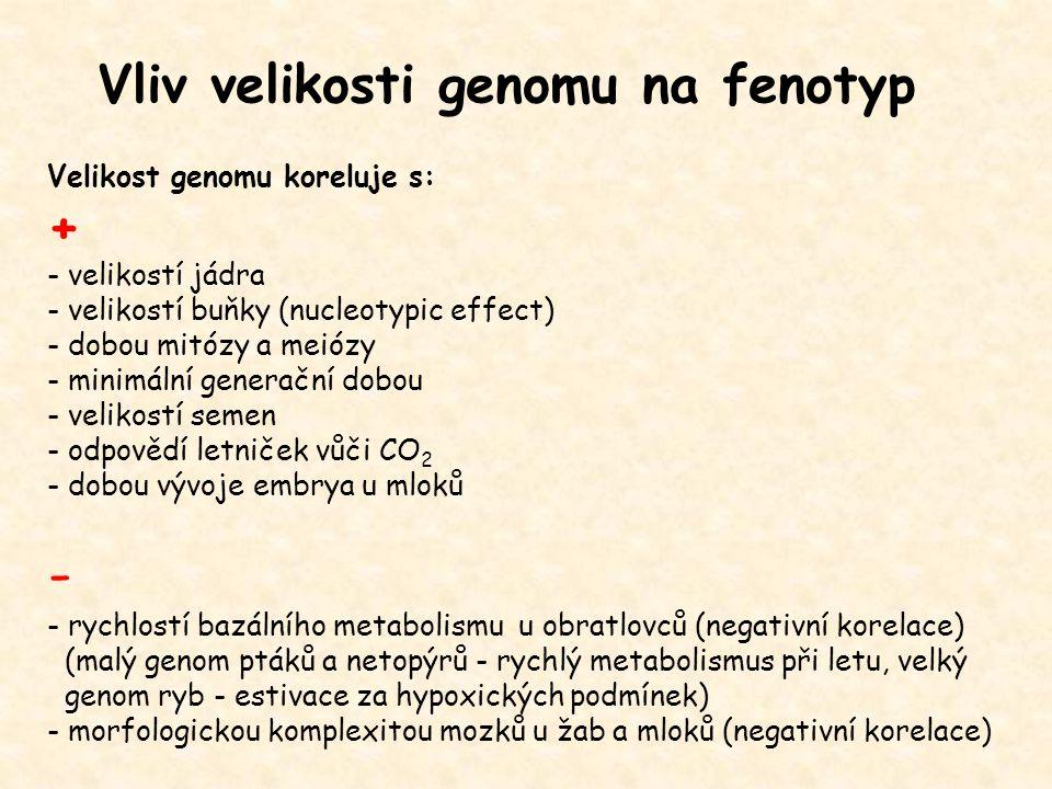 - Vliv velikosti genomu na fenotyp + Velikost genomu koreluje s: