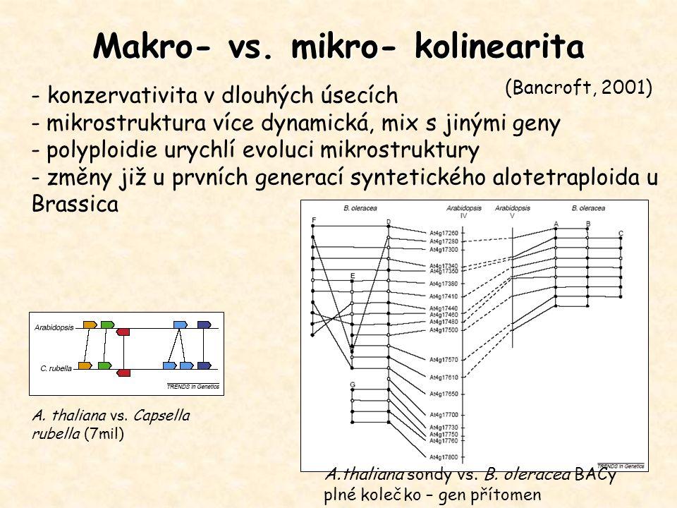 Makro- vs. mikro- kolinearita