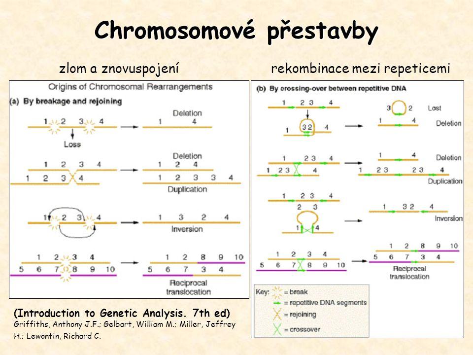 Chromosomové přestavby