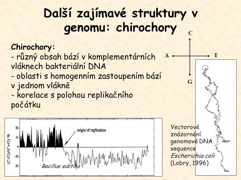 Další zajímavé struktury v genomu: chirochory