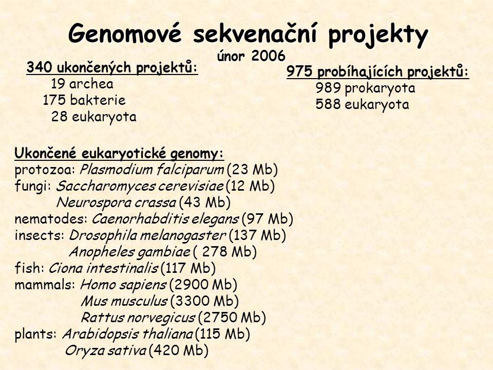 Genomové sekvenační projekty únor 2006