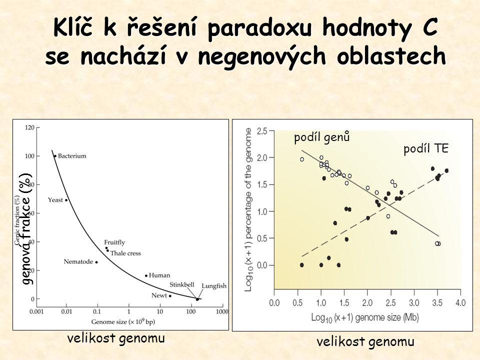 Klíč k řešení paradoxu hodnoty C se nachází v negenových oblastech