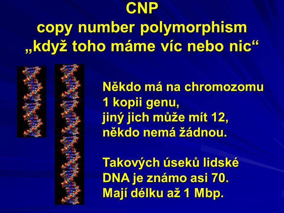 """CNP copy number polymorphism """"když toho máme víc nebo nic"""