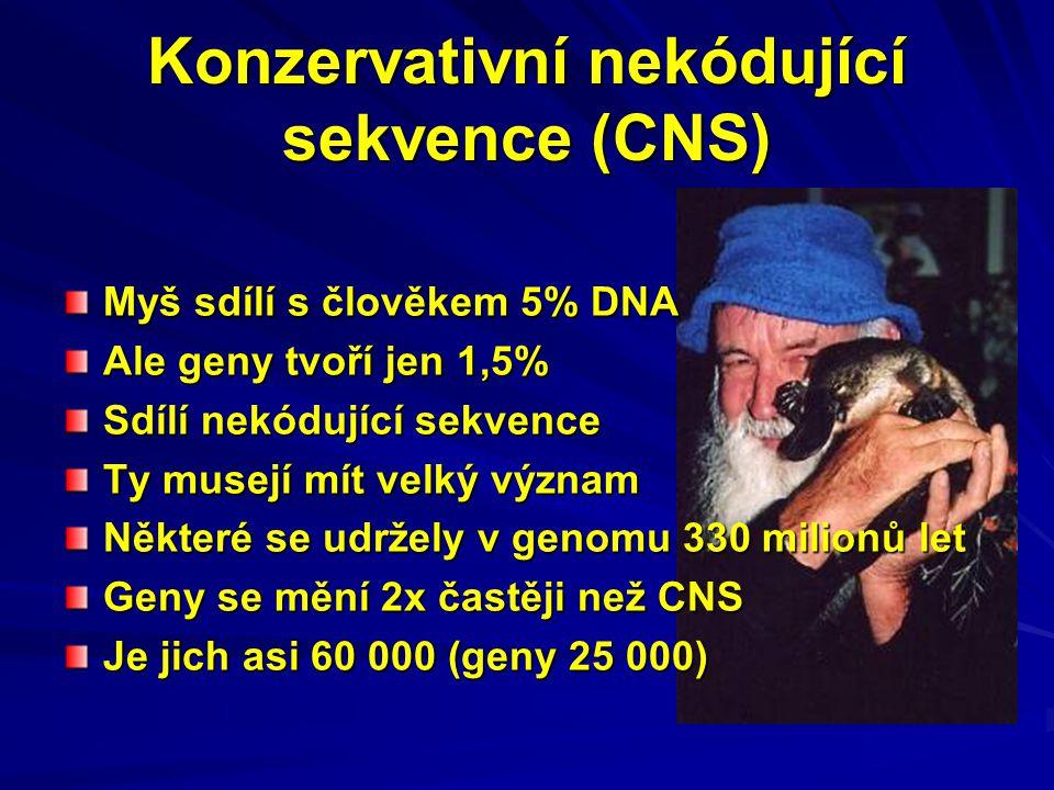 Konzervativní nekódující sekvence (CNS)