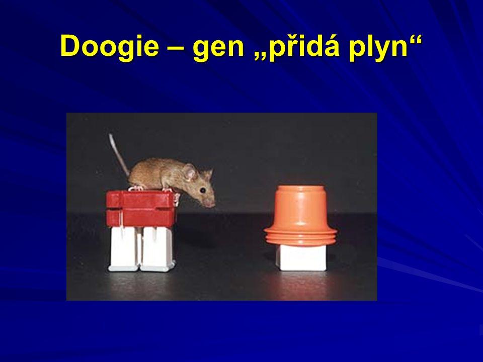 """Doogie – gen """"přidá plyn"""