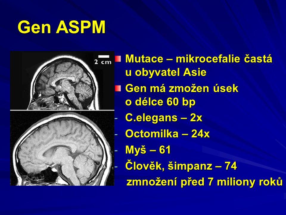 Gen ASPM Mutace – mikrocefalie častá u obyvatel Asie