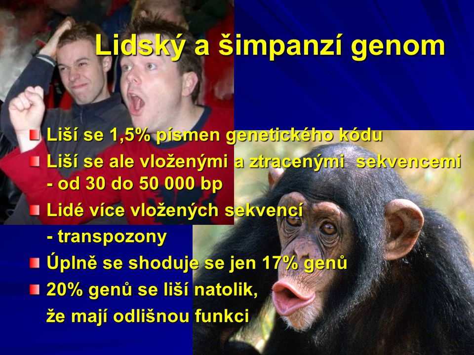 Lidský a šimpanzí genom