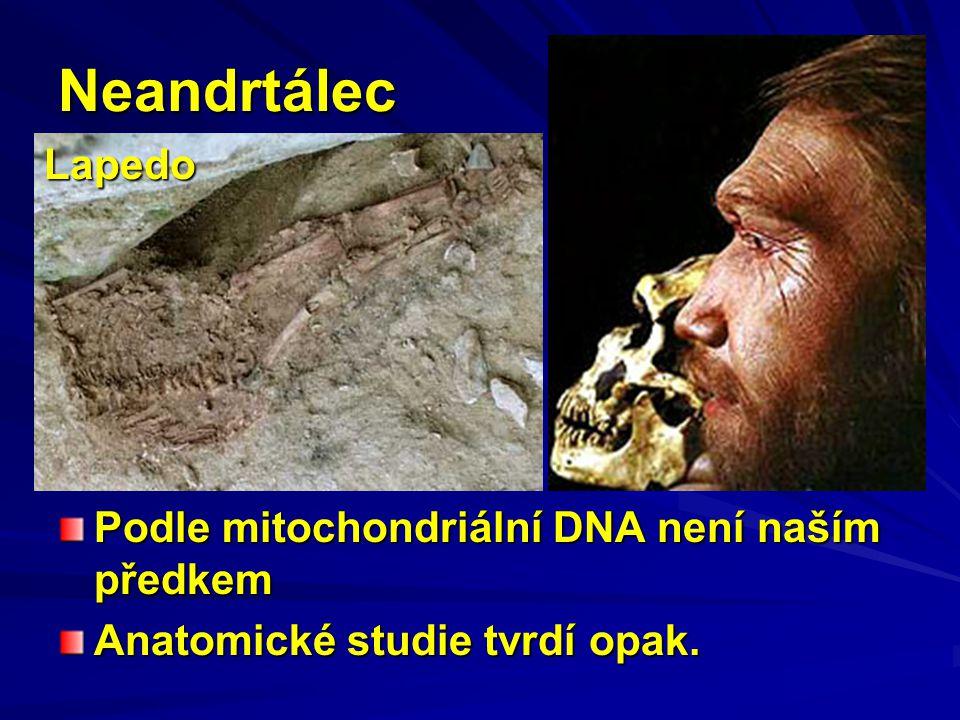 Neandrtálec Lapedo Podle mitochondriální DNA není naším předkem