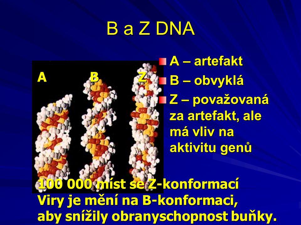B a Z DNA A – artefakt B – obvyklá A B Z
