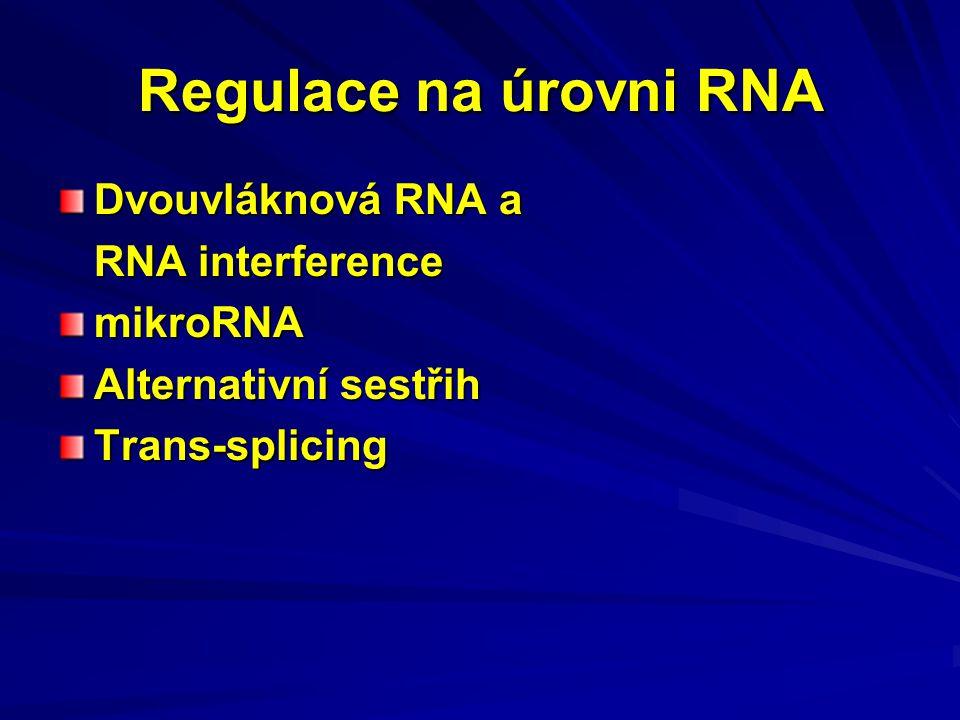 Regulace na úrovni RNA Dvouvláknová RNA a RNA interference mikroRNA