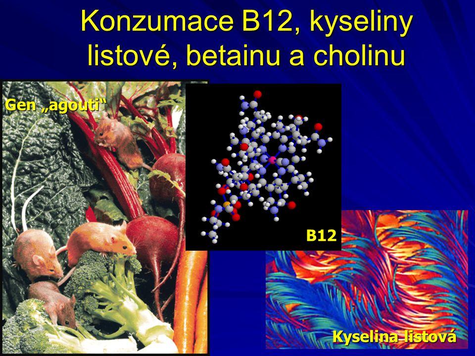 Konzumace B12, kyseliny listové, betainu a cholinu