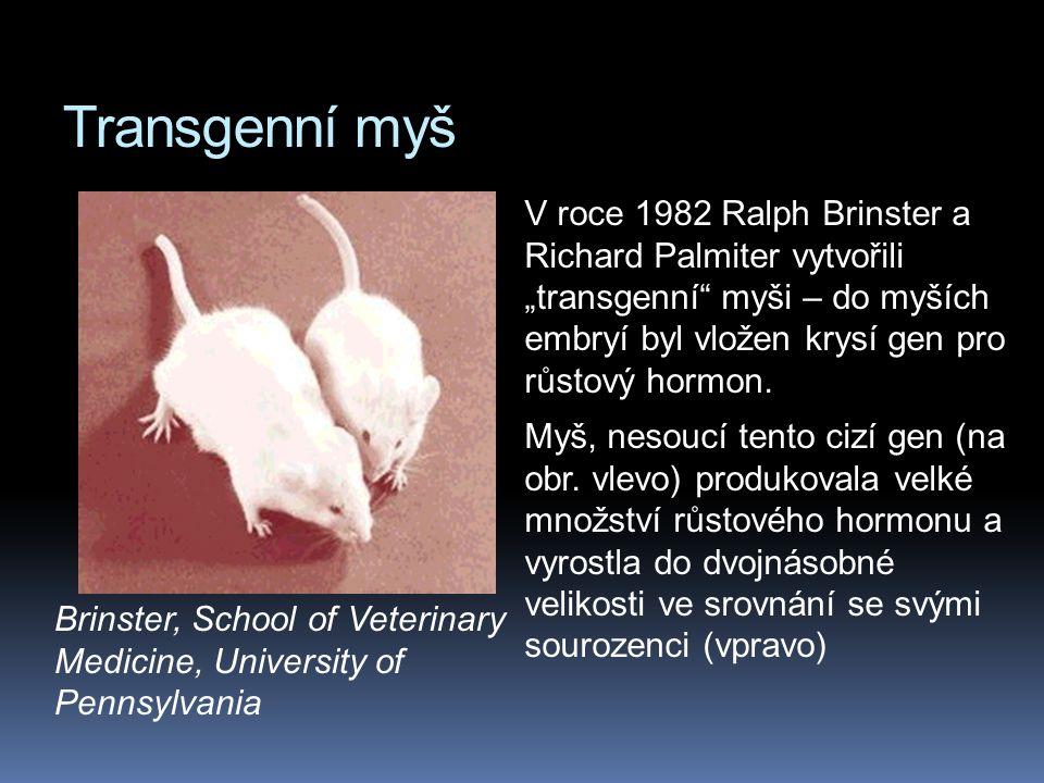 Transgenní myš