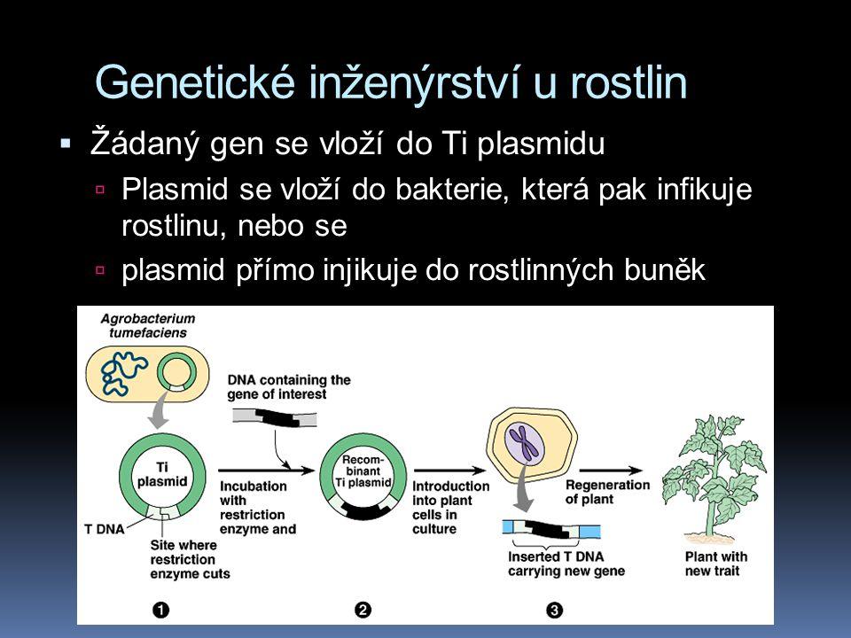 Genetické inženýrství u rostlin