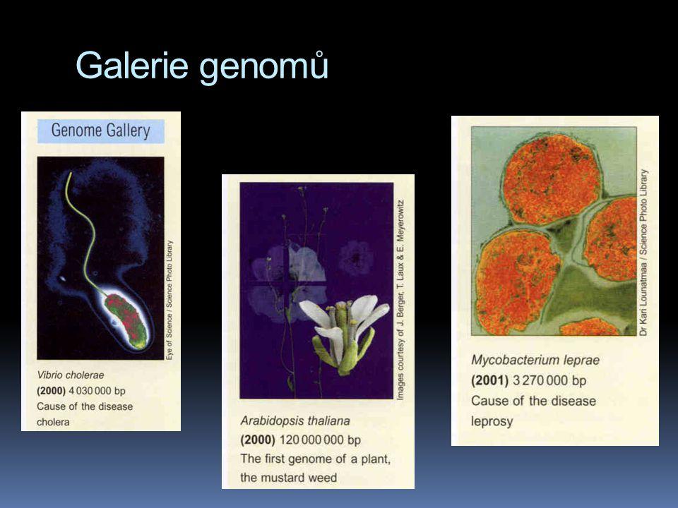 Galerie genomů