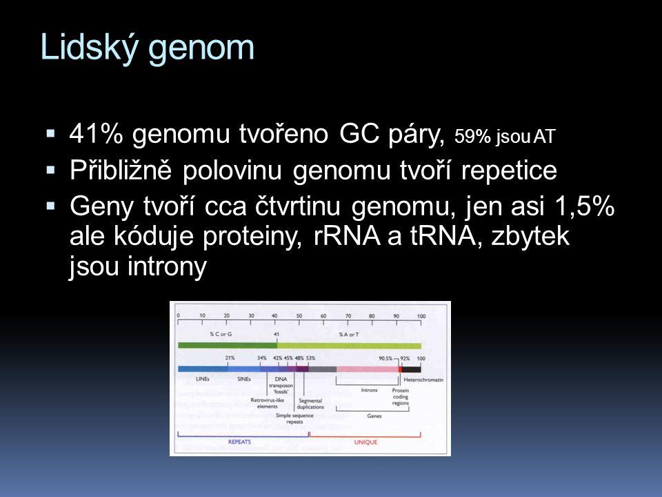 Lidský genom 41% genomu tvořeno GC páry, 59% jsou AT
