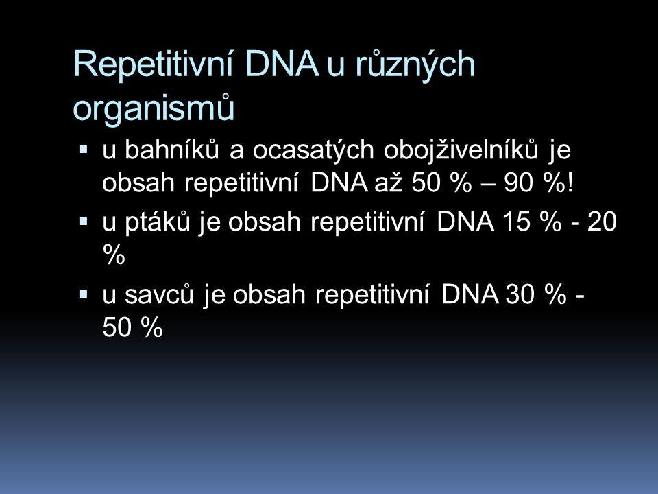 Repetitivní DNA u různých organismů