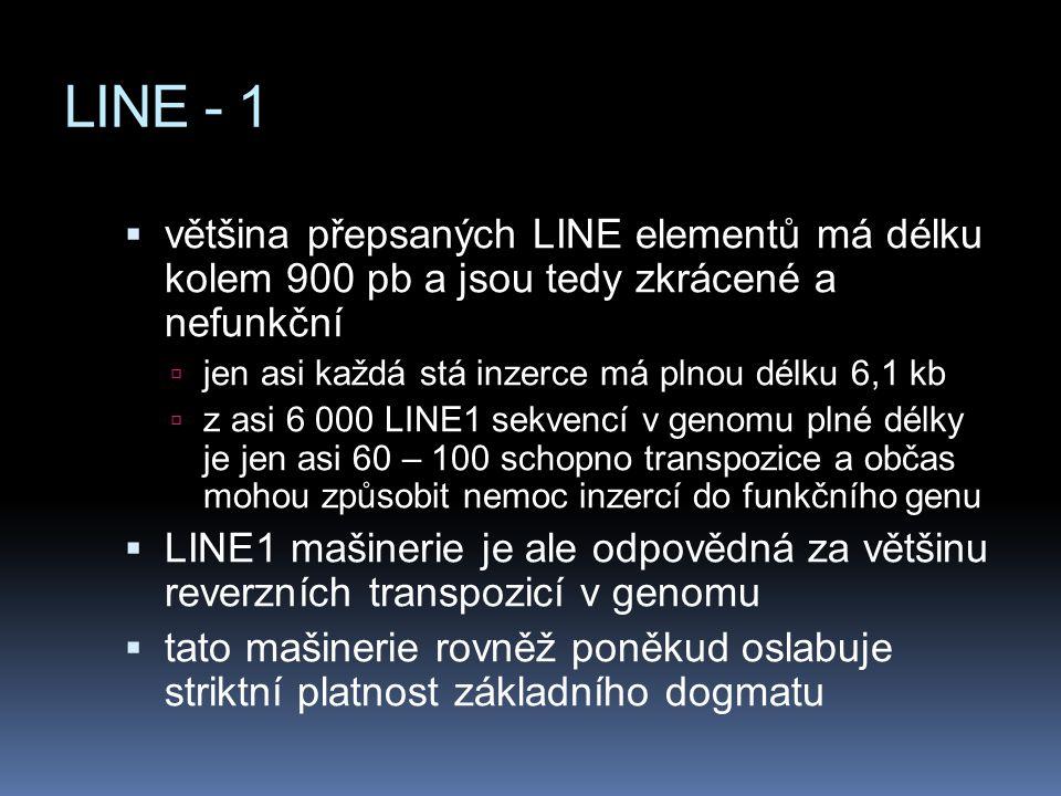 LINE - 1 většina přepsaných LINE elementů má délku kolem 900 pb a jsou tedy zkrácené a nefunkční.