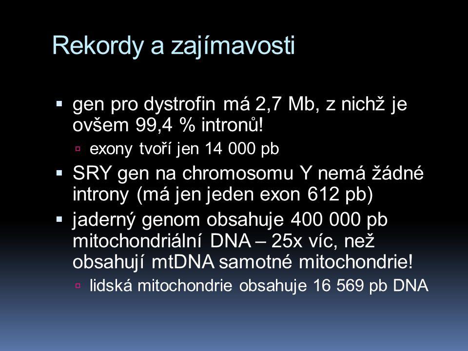 Rekordy a zajímavosti gen pro dystrofin má 2,7 Mb, z nichž je ovšem 99,4 % intronů! exony tvoří jen 14 000 pb.