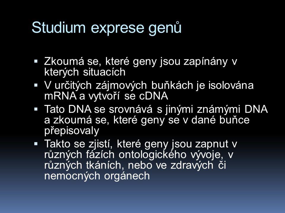 Studium exprese genů Zkoumá se, které geny jsou zapínány v kterých situacích. V určitých zájmových buňkách je isolována mRNA a vytvoří se cDNA.