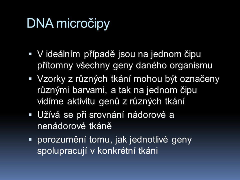 DNA micročipy V ideálním případě jsou na jednom čipu přítomny všechny geny daného organismu.