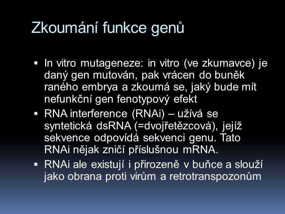 Zkoumání funkce genů