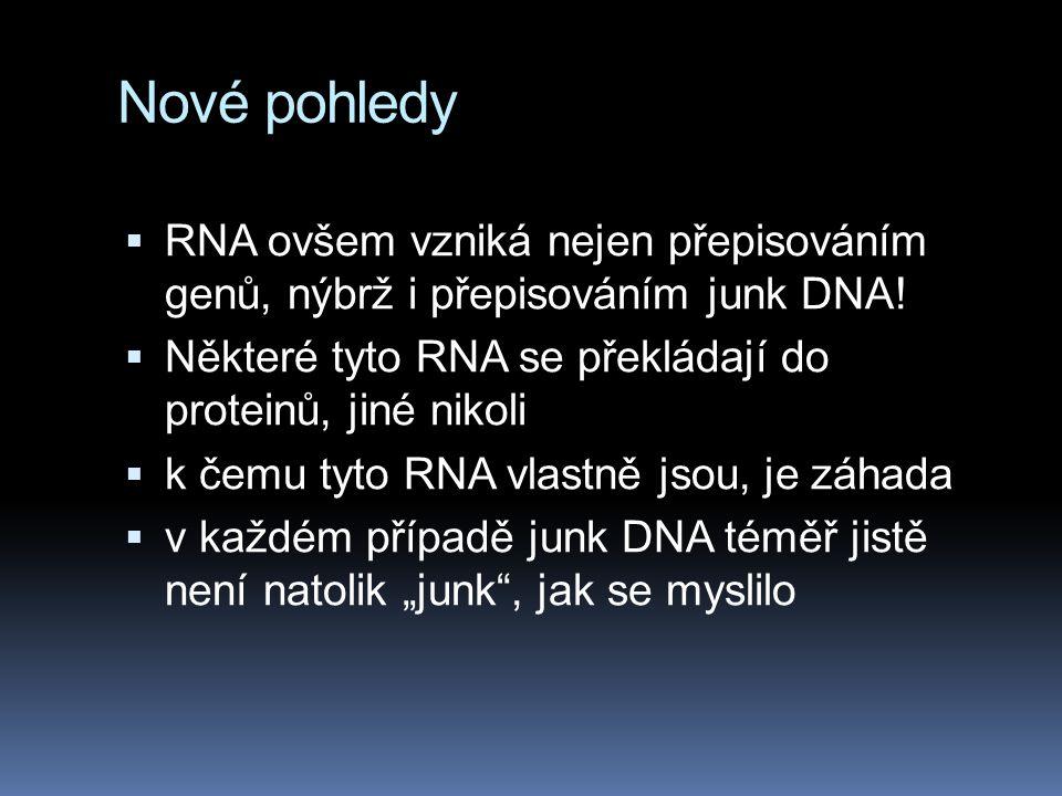 Nové pohledy RNA ovšem vzniká nejen přepisováním genů, nýbrž i přepisováním junk DNA! Některé tyto RNA se překládají do proteinů, jiné nikoli.